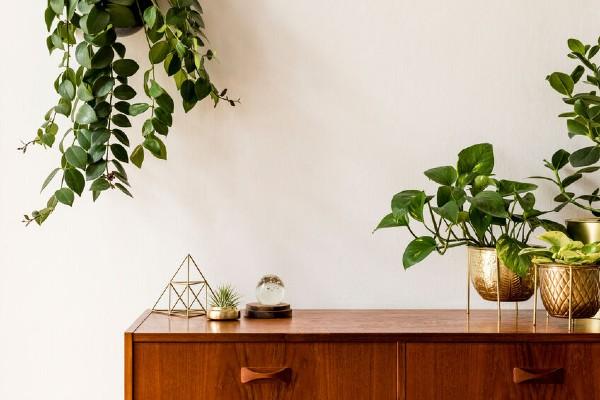pokok hiasan dalam rumah, pokok hiasan, pokok dalam rumah, deko, dekorasi rumah
