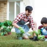majlis perbandaran, garden plants in malaysia, local council, house plants, home plants, plants in house, plants at home, plants in home
