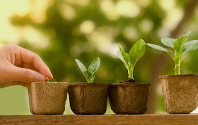 growing-indoor-plants-vegetables-cover